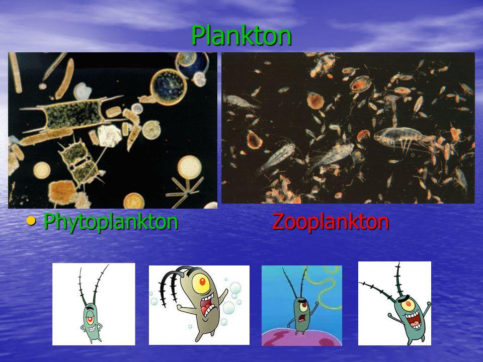 Plankton Phytoplankton Zooplankton Phytoplankton Zooplankton