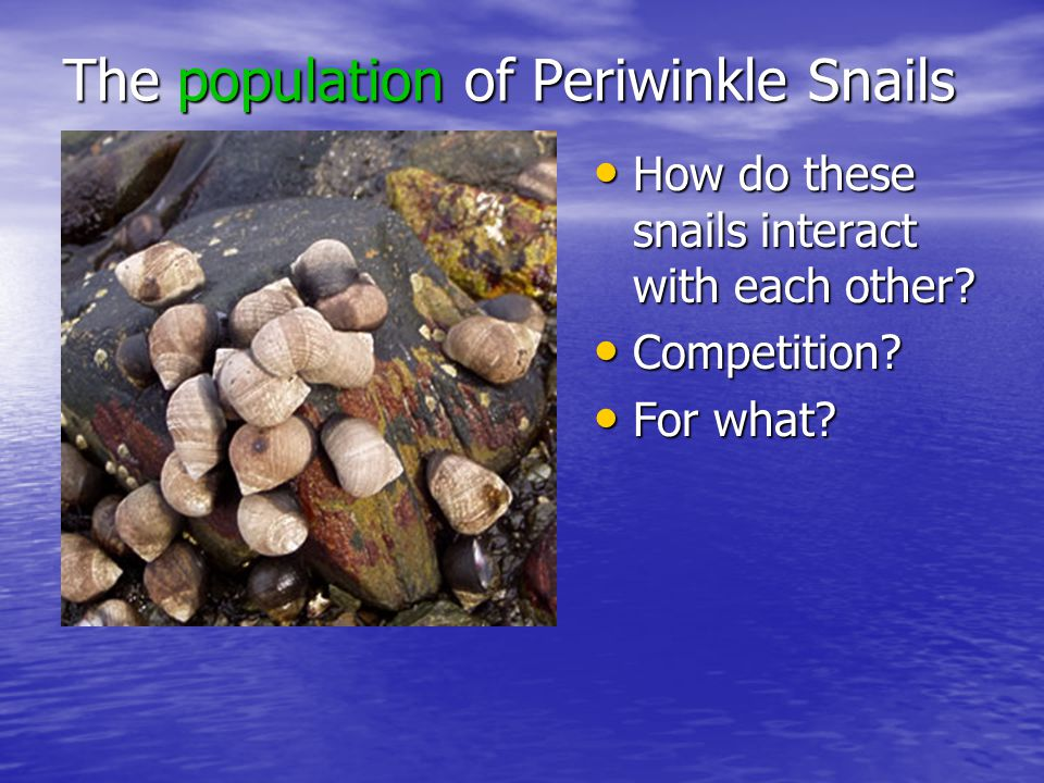 The population of Periwinkle Snails How do these snails interact with each other.