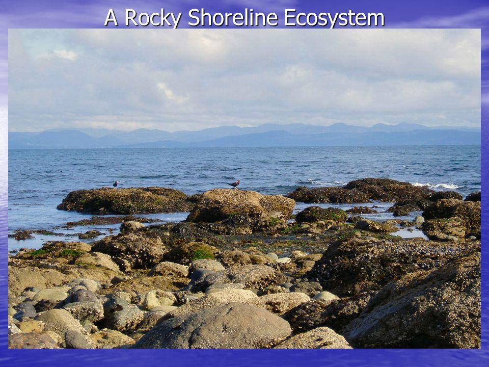 A Rocky Shoreline Ecosystem