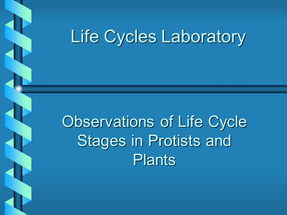 Life Cycles Laboratory Observations of Life Cycle Stages in Protists and Plants