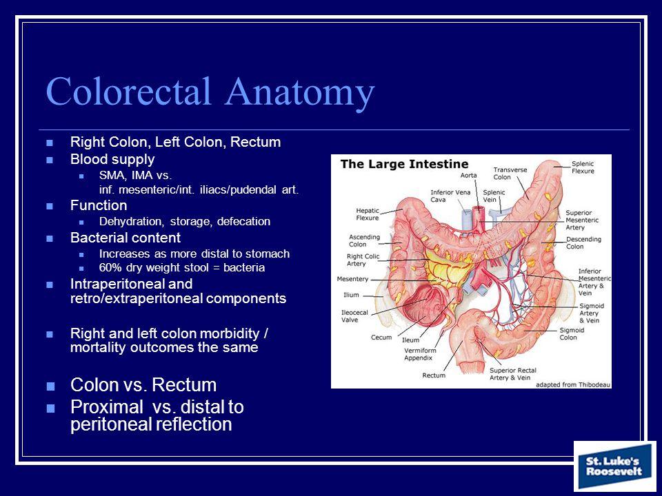 Colorectal Anatomy Right Colon, Left Colon, Rectum Blood supply SMA, IMA vs. inf. mesenteric/int. iliacs/pudendal art. Function Dehydration, storage,