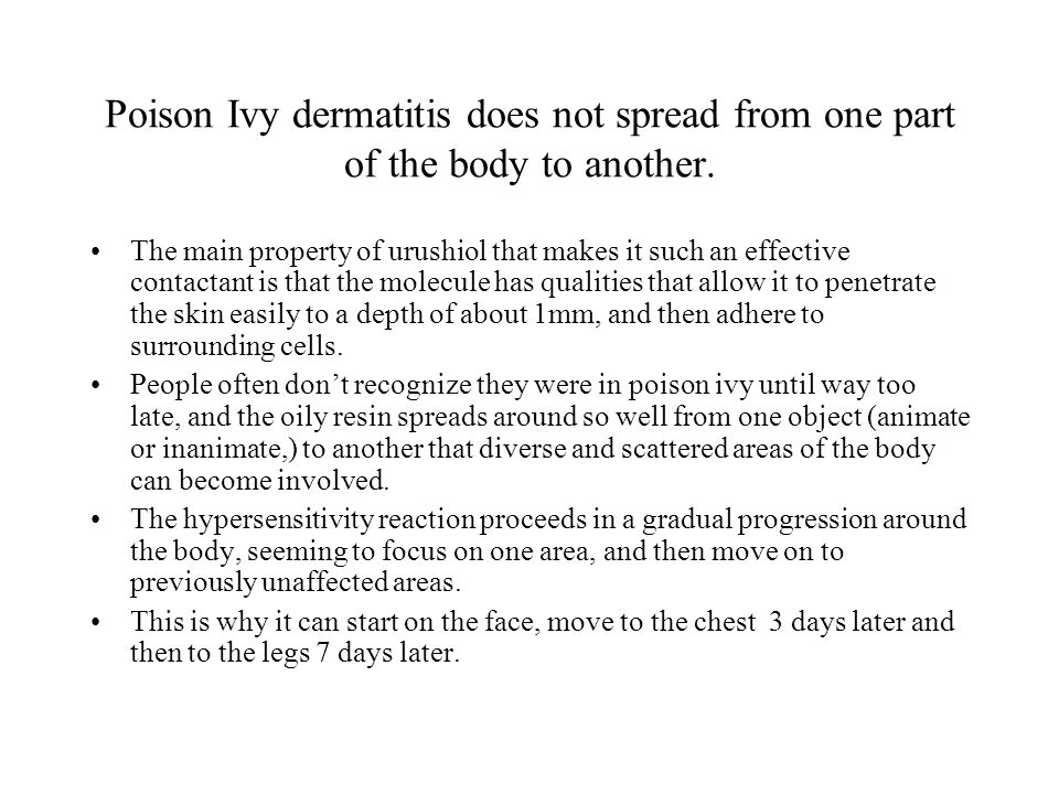 Poison Ivy dermatitis does not spread from one part of the body to another.