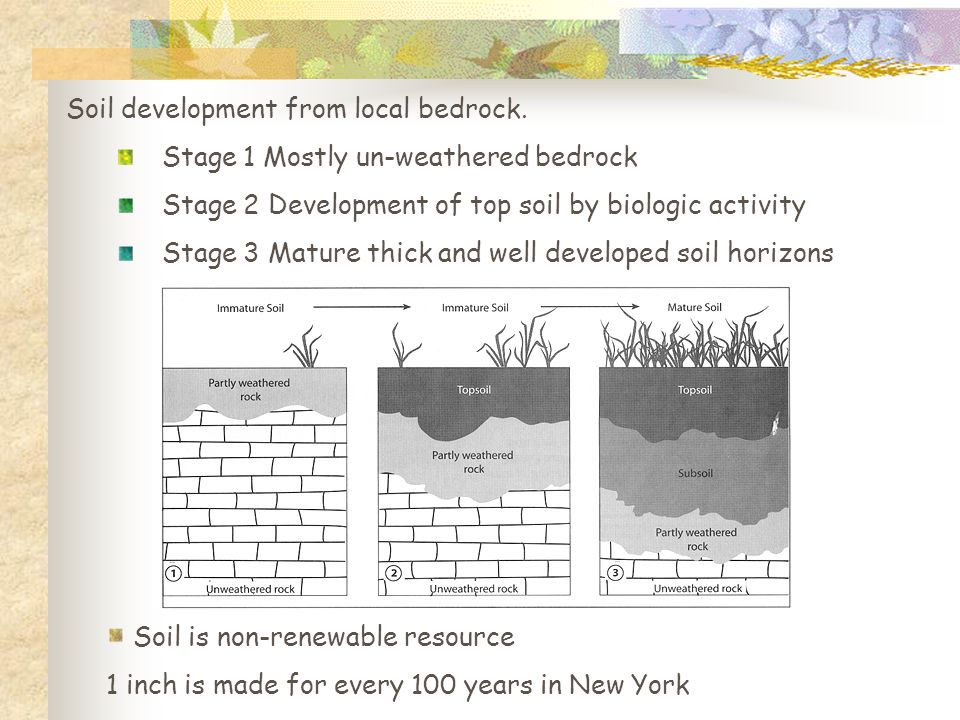 Soil development from local bedrock. Stage 1 Mostly un-weathered bedrock Stage 2 Development of top soil by biologic activity Stage 3 Mature thick and