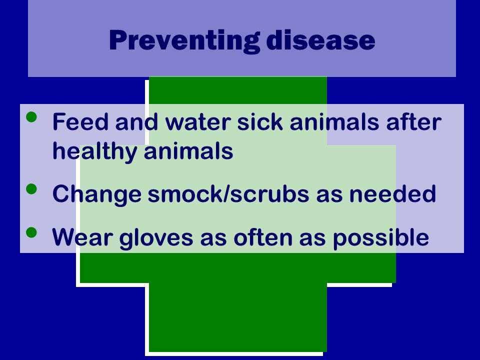Preventing disease Feed and water sick animals after healthy animals Change smock/scrubs as needed Wear gloves as often as possible