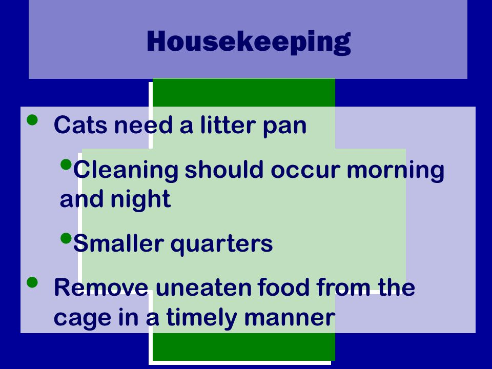 Housekeeping Cats need a litter pan Cleaning should occur morning and night Smaller quarters Remove uneaten food from the cage in a timely manner