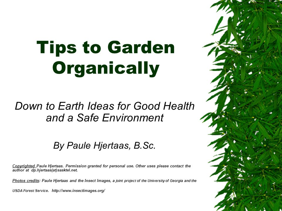 Organic Gardening  Is an approach based on observation and prevention  Deals with the causes of problems  Pays attention to garden design and garden and plant siting  Builds up soil, stability and bio-diversity  Starts by using the safest methods  Is not simply replacing one chemical by a less toxic product  Treated wood of any type has no place in an organic garden ( CCA creosote, penta )