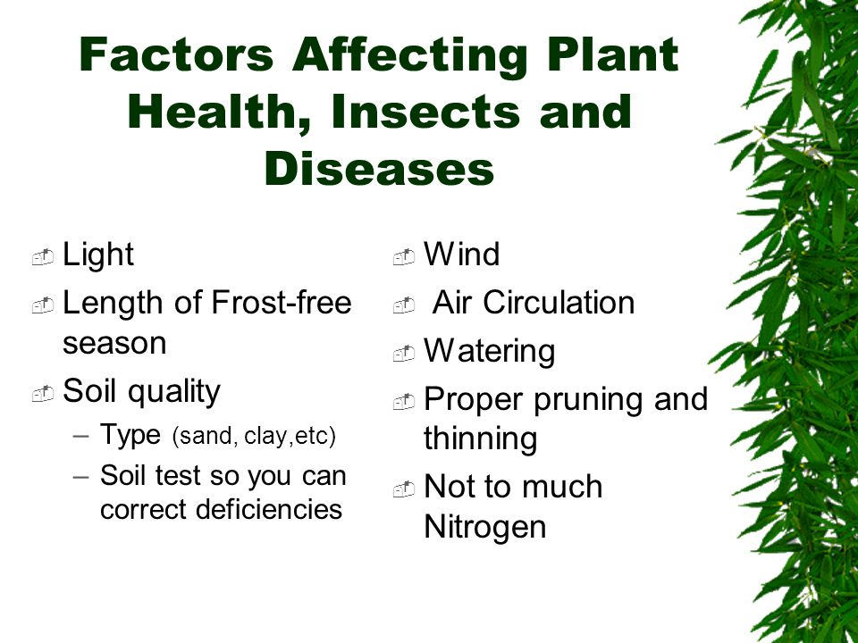 Factors Affecting Plant Health, Insects and Diseases  Light  Length of Frost-free season  Soil quality –Type (sand, clay,etc) –Soil test so you can correct deficiencies  Wind  Air Circulation  Watering  Proper pruning and thinning  Not to much Nitrogen