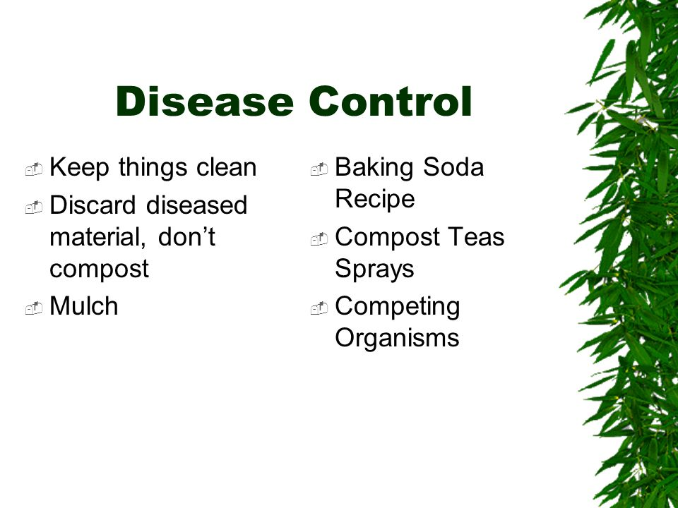 Disease Control  Keep things clean  Discard diseased material, don't compost  Mulch  Baking Soda Recipe  Compost Teas Sprays  Competing Organisms