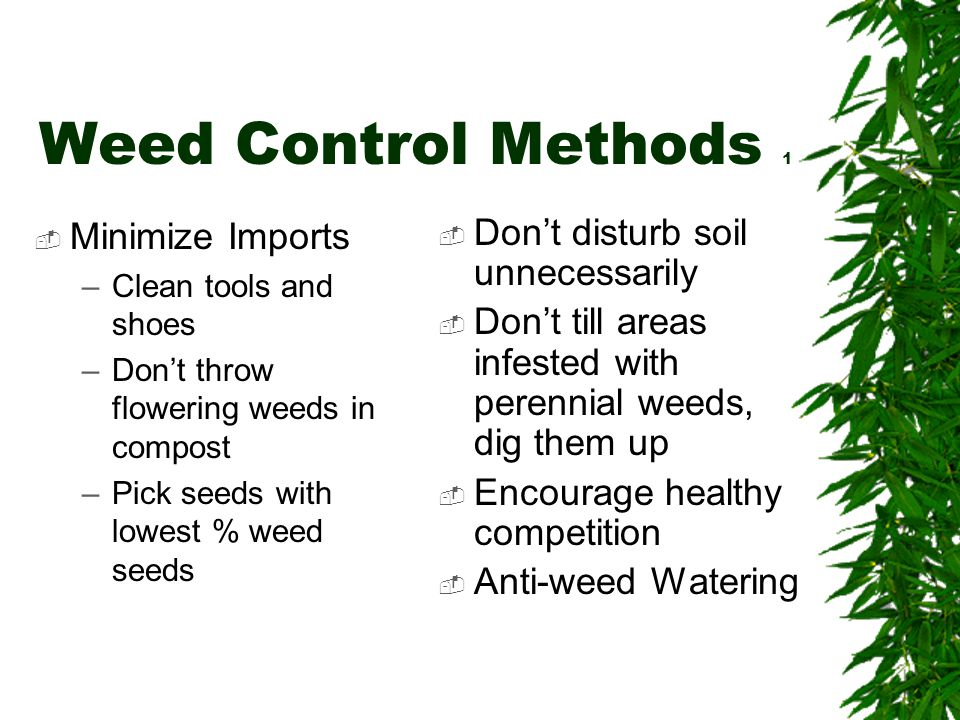 Weed Control Methods 1  Minimize Imports –Clean tools and shoes –Don't throw flowering weeds in compost –Pick seeds with lowest % weed seeds  Don't disturb soil unnecessarily  Don't till areas infested with perennial weeds, dig them up  Encourage healthy competition  Anti-weed Watering
