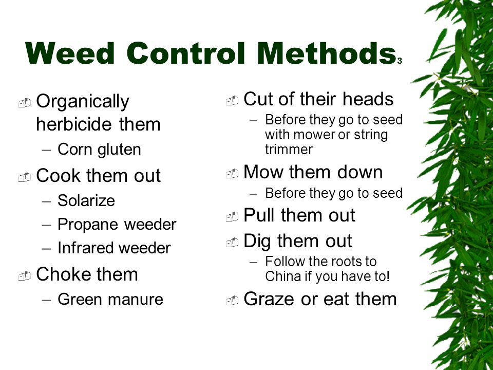 Weed Control Methods 3  Organically herbicide them –Corn gluten  Cook them out –Solarize –Propane weeder –Infrared weeder  Choke them –Green manure  Cut of their heads –Before they go to seed with mower or string trimmer  Mow them down –Before they go to seed  Pull them out  Dig them out –Follow the roots to China if you have to.