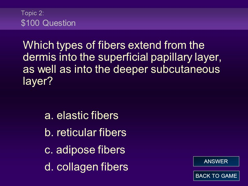 Topic 2: $100 Question Which types of fibers extend from the dermis into the superficial papillary layer, as well as into the deeper subcutaneous laye