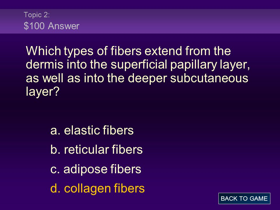 Topic 2: $100 Answer Which types of fibers extend from the dermis into the superficial papillary layer, as well as into the deeper subcutaneous layer?