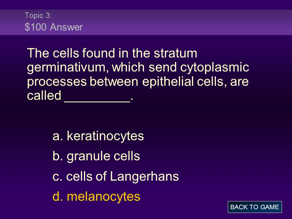 Topic 3: $100 Answer The cells found in the stratum germinativum, which send cytoplasmic processes between epithelial cells, are called _________. a.