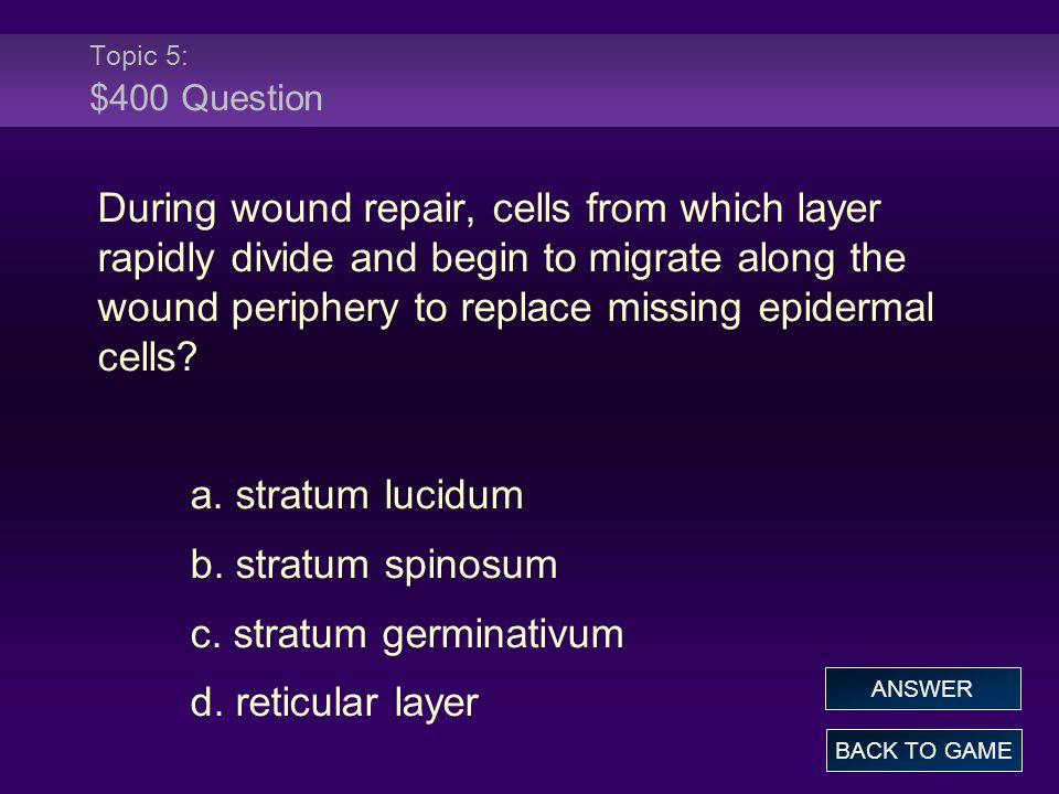Topic 5: $400 Question During wound repair, cells from which layer rapidly divide and begin to migrate along the wound periphery to replace missing ep