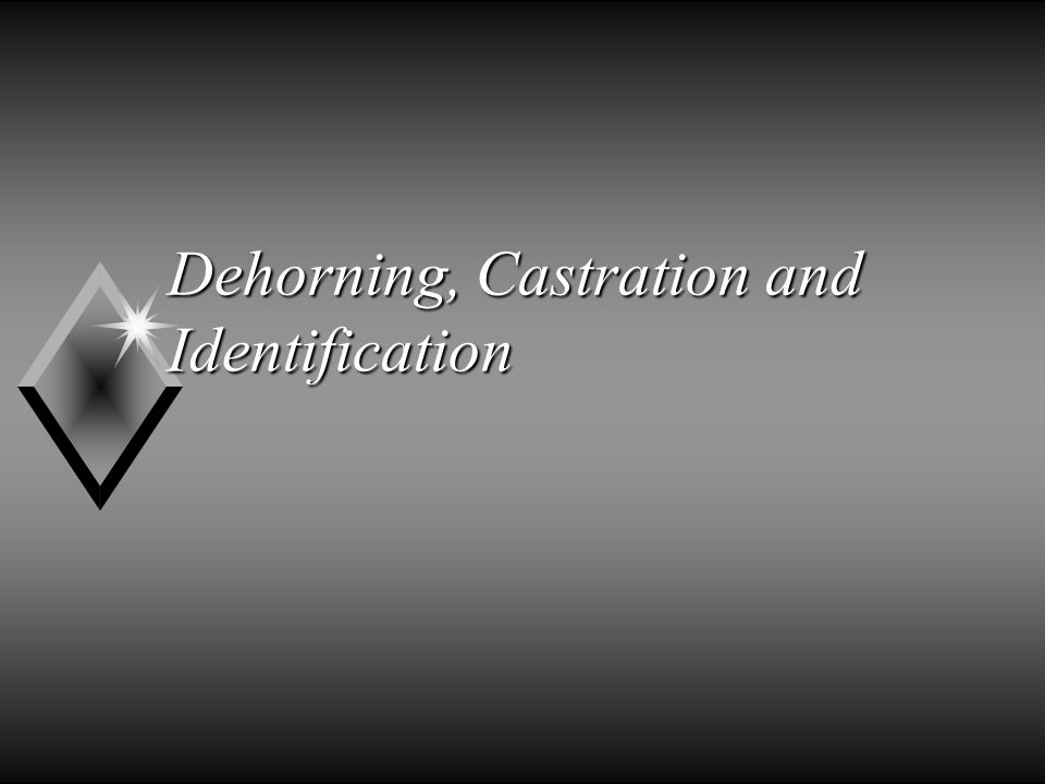 Dehorning, Castration and Identification