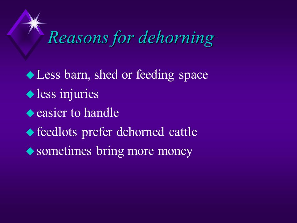 Reasons for dehorning u Less barn, shed or feeding space u less injuries u easier to handle u feedlots prefer dehorned cattle u sometimes bring more money