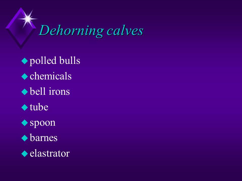 Dehorning calves u polled bulls u chemicals u bell irons u tube u spoon u barnes u elastrator