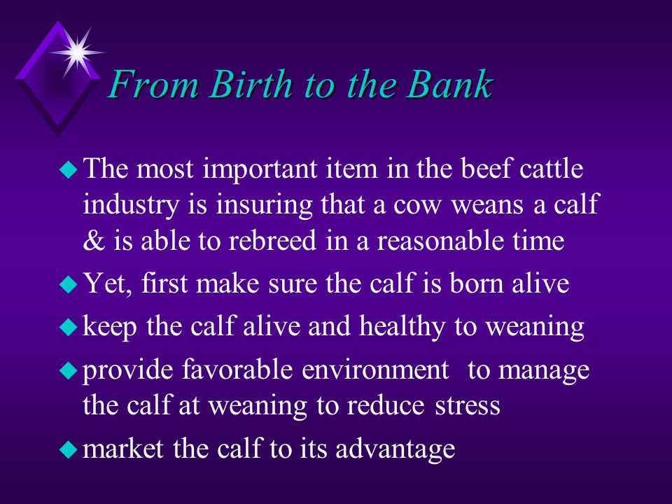 From Birth to the Bank u The most important item in the beef cattle industry is insuring that a cow weans a calf & is able to rebreed in a reasonable time u Yet, first make sure the calf is born alive u keep the calf alive and healthy to weaning u provide favorable environment to manage the calf at weaning to reduce stress u market the calf to its advantage