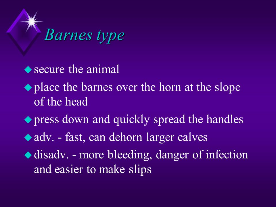 Barnes type u secure the animal u place the barnes over the horn at the slope of the head u press down and quickly spread the handles u adv.