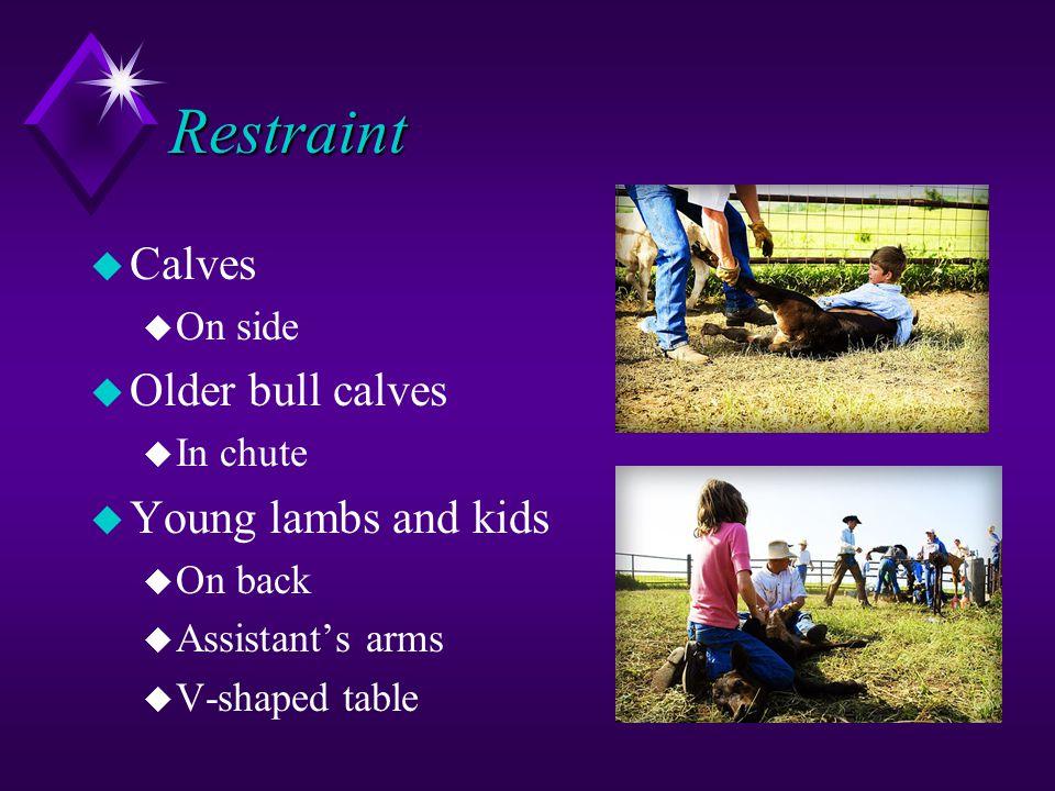 Restraint u Calves u On side u Older bull calves u In chute u Young lambs and kids u On back u Assistant's arms u V-shaped table
