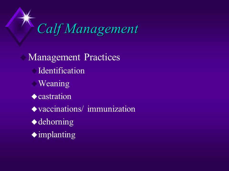 Calf Management u Management Practices u Identification u Weaning u castration u vaccinations/ immunization u dehorning u implanting