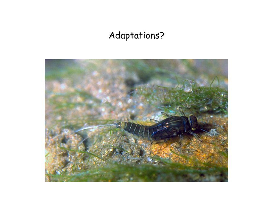Adaptations?