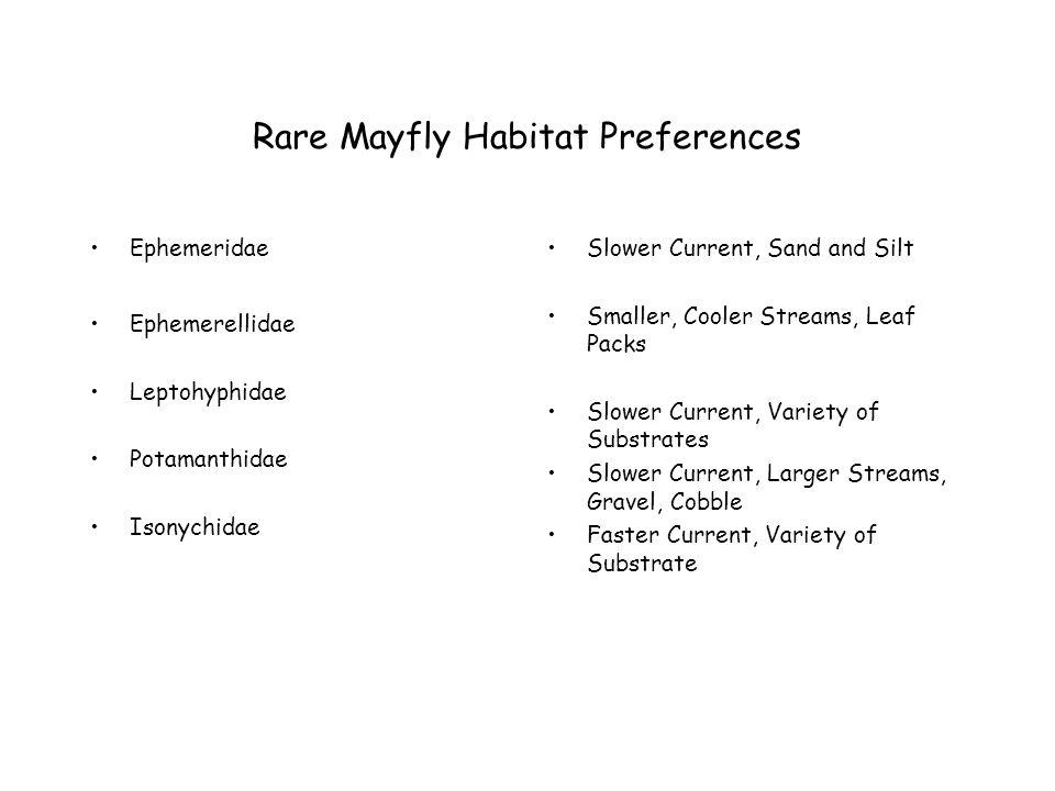 Rare Mayfly Habitat Preferences Ephemeridae Ephemerellidae Leptohyphidae Potamanthidae Isonychidae Slower Current, Sand and Silt Smaller, Cooler Streams, Leaf Packs Slower Current, Variety of Substrates Slower Current, Larger Streams, Gravel, Cobble Faster Current, Variety of Substrate
