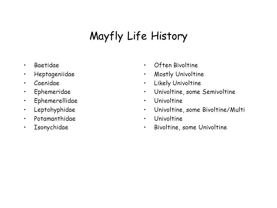 Mayfly Life History Baetidae Heptageniidae Caenidae Ephemeridae Ephemerellidae Leptohyphidae Potamanthidae Isonychidae Often Bivoltine Mostly Univoltine Likely Univoltine Univoltine, some Semivoltine Univoltine Univoltine, some Bivoltine/Multi Univoltine Bivoltine, some Univoltine
