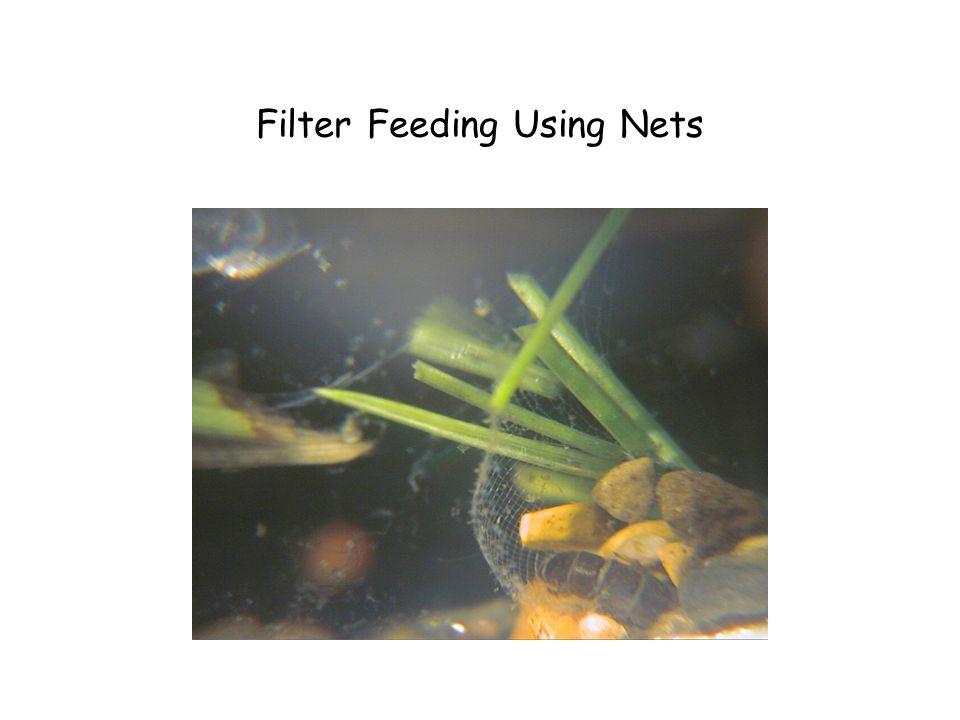 Filter Feeding Using Nets