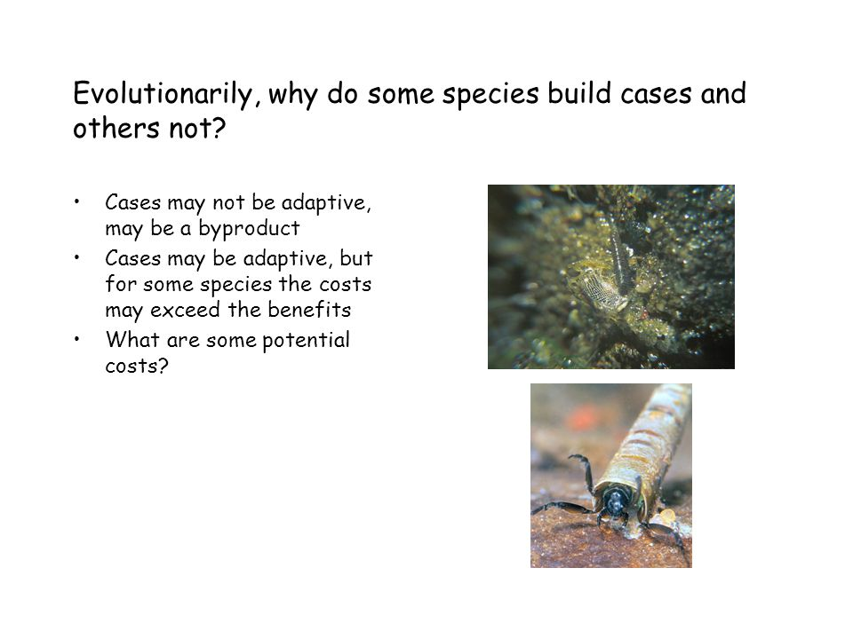 Evolutionarily, why do some species build cases and others not.