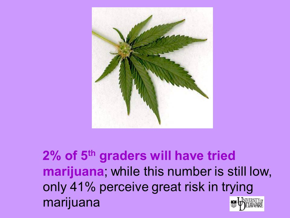 2% of 5 th graders will have tried marijuana; while this number is still low, only 41% perceive great risk in trying marijuana
