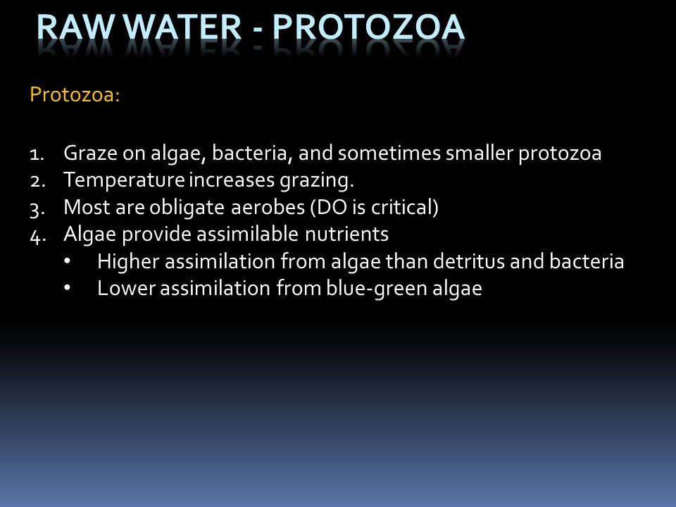 Protozoa: 1.Graze on algae, bacteria, and sometimes smaller protozoa 2.Temperature increases grazing. 3.Most are obligate aerobes (DO is critical) 4.A