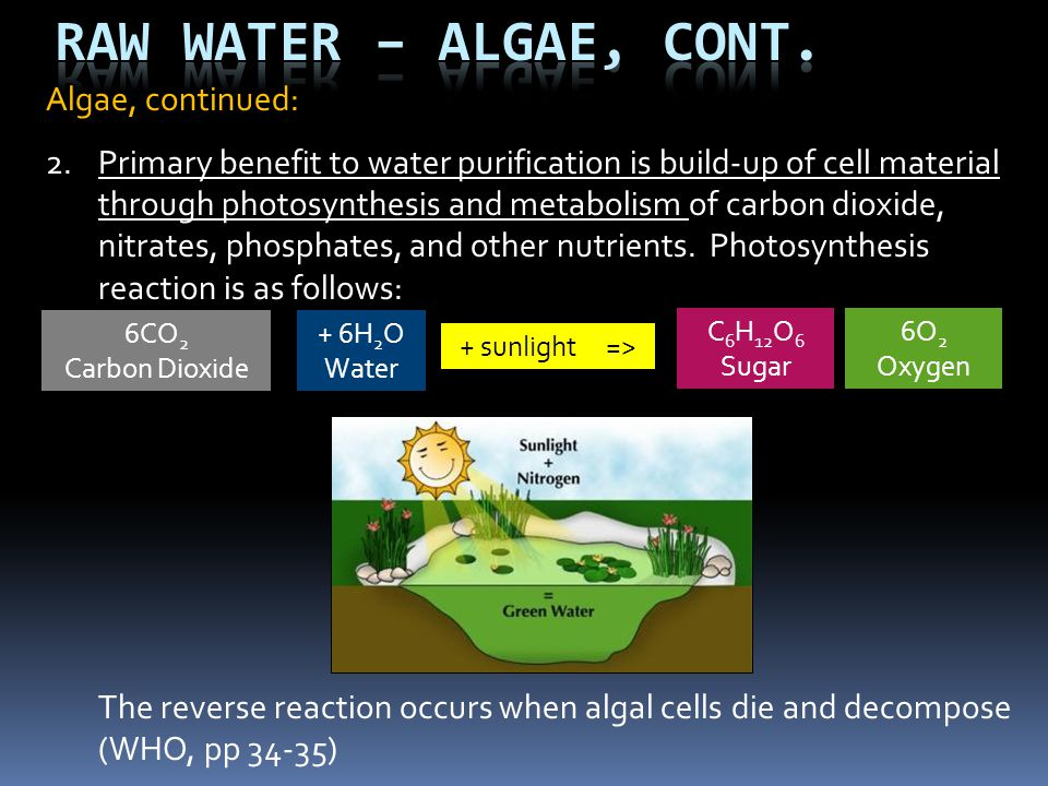 Algae, continued: 2.Primary benefit to water purification is build-up of cell material through photosynthesis and metabolism of carbon dioxide, nitrat