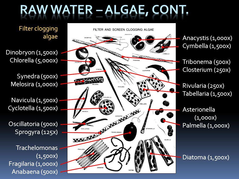 Filter clogging algae Dinobryon (1,500x) Chlorella (5,000x) Synedra (500x) Melosira (1,000x) Navicula (1,500x) Cyclotella (1,500x) Oscillatoria (500x)