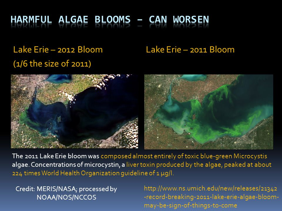 Lake Erie – 2012 Bloom Lake Erie – 2011 Bloom (1/6 the size of 2011) Credit: MERIS/NASA; processed by NOAA/NOS/NCCOS The 2011 Lake Erie bloom was comp
