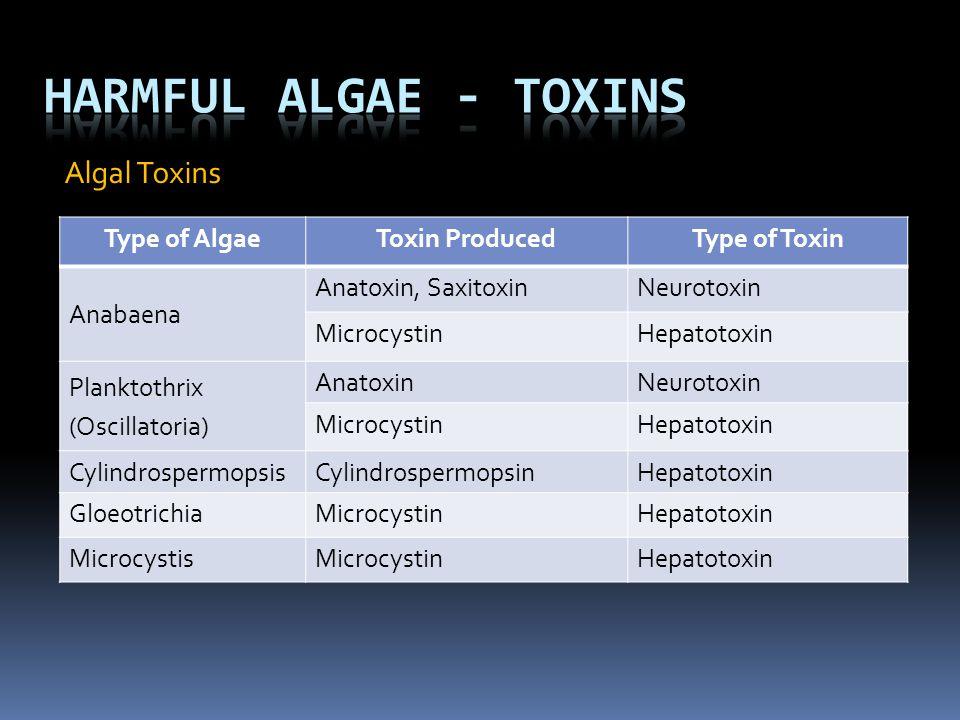 Algal Toxins Type of AlgaeToxin ProducedType of Toxin Anabaena Anatoxin, SaxitoxinNeurotoxin MicrocystinHepatotoxin Planktothrix (Oscillatoria) Anatox