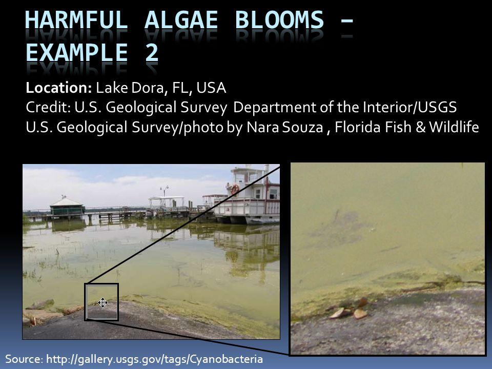 Location: Lake Dora, FL, USA Credit: U.S. Geological Survey Department of the Interior/USGS U.S. Geological Survey/photo by Nara Souza, Florida Fish &