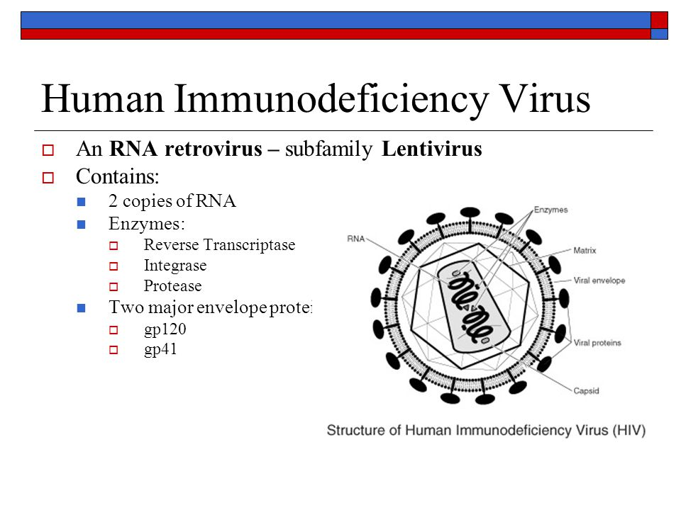 Human Immunodeficiency Virus  An RNA retrovirus – subfamily Lentivirus  Contains: 2 copies of RNA Enzymes:  Reverse Transcriptase  Integrase  Pro