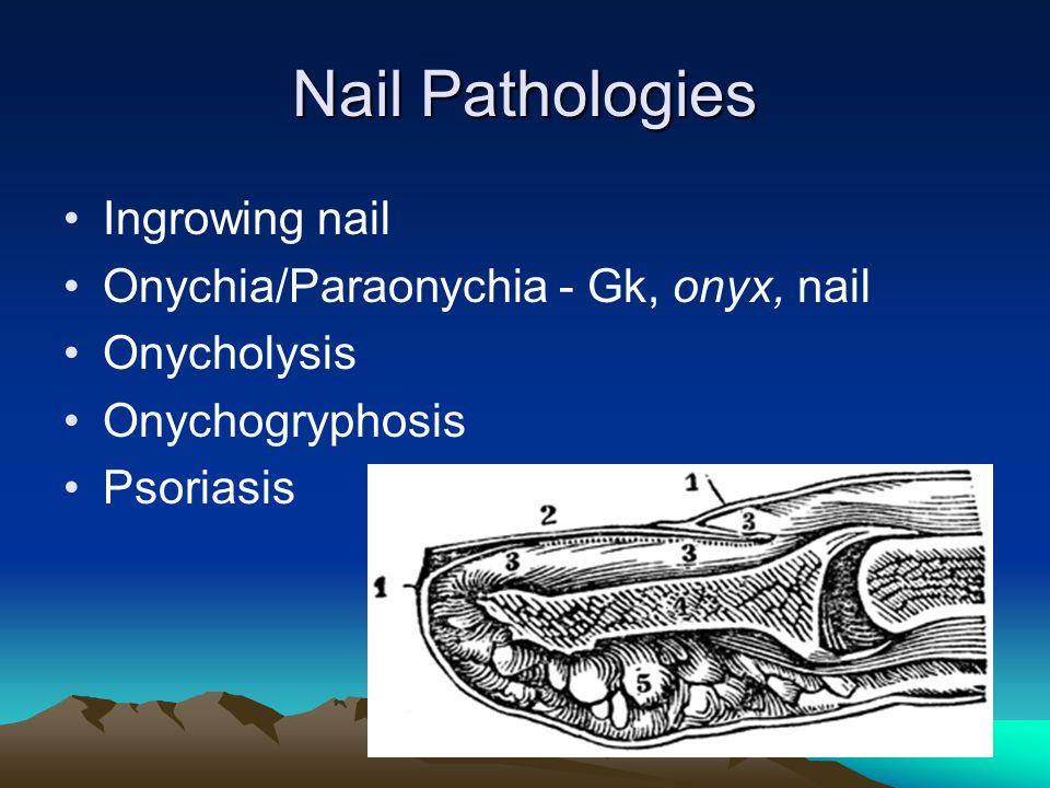 Nail Pathologies Ingrowing nail Onychia/Paraonychia - Gk, onyx, nail Onycholysis Onychogryphosis Psoriasis