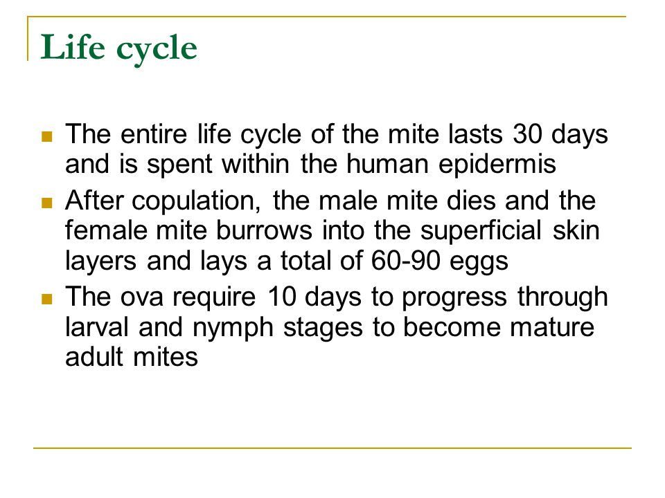 Mites can survive up to 3 days away from human skin, so fomites such as infested bedding or clothing are an alternate but infrequent source of transmission Mites move through the top layers of skin by secreting proteases that degrade the stratum corneum creating burrows They feed on dissolved tissue but do not ingest blood