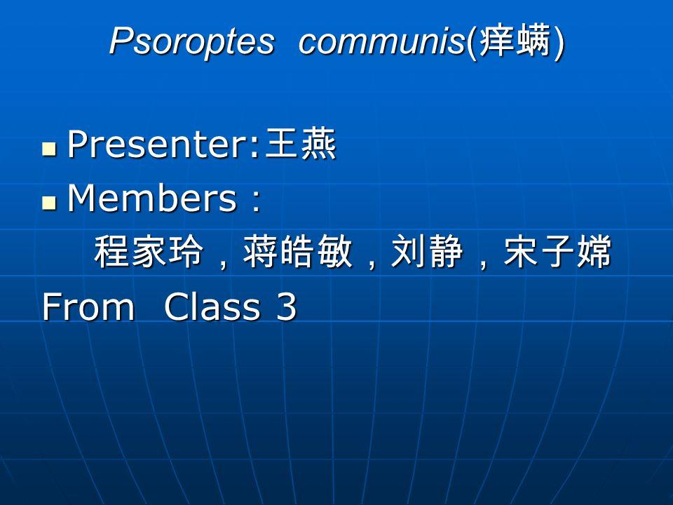 Psoroptes communis( 痒螨 ) Presenter: 王燕 Presenter: 王燕 Members : Members : 程家玲,蒋皓敏,刘静,宋子嫦 程家玲,蒋皓敏,刘静,宋子嫦 From Class 3