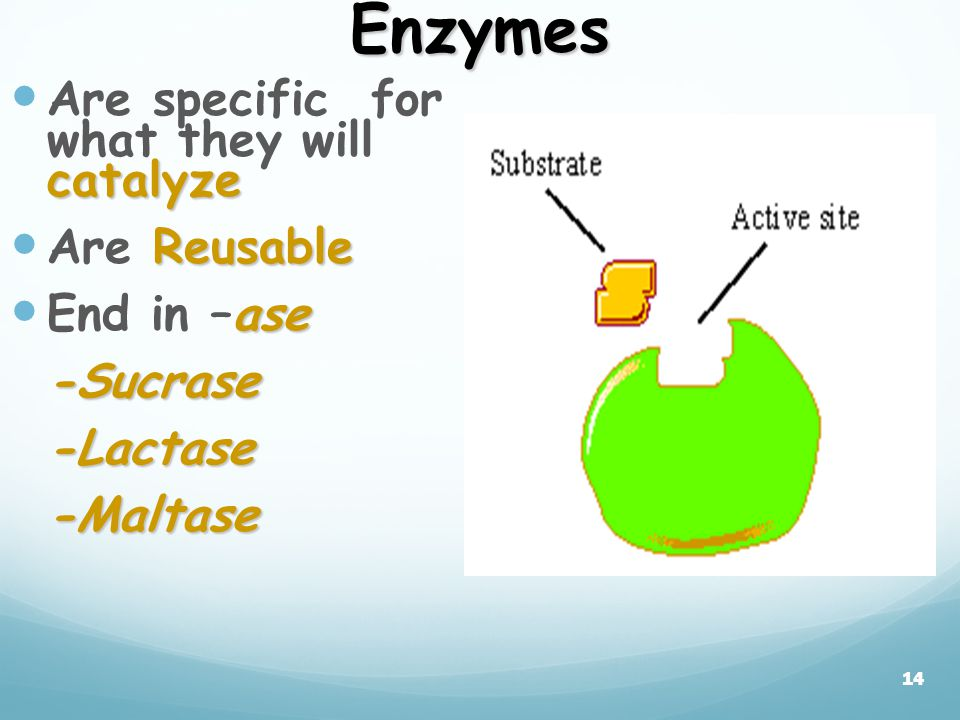 13 How do enzymes Work. weakening bonds which lowers activation energy.