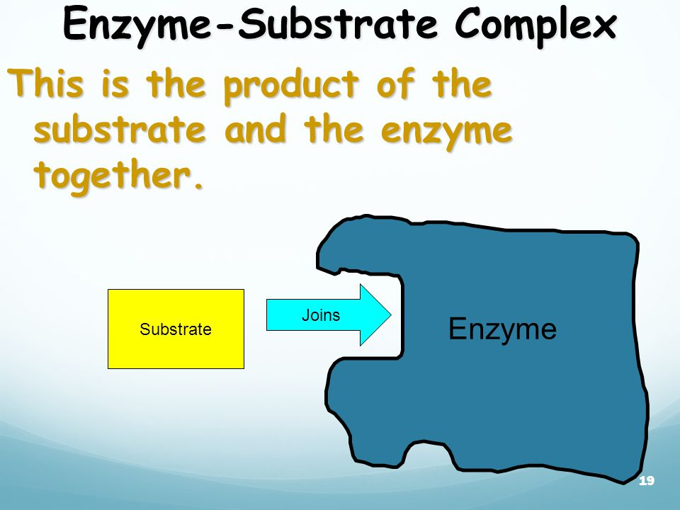 18 Active Site restricted region enzyme binds substrate A restricted region of an enzyme molecule which binds to the substrate.