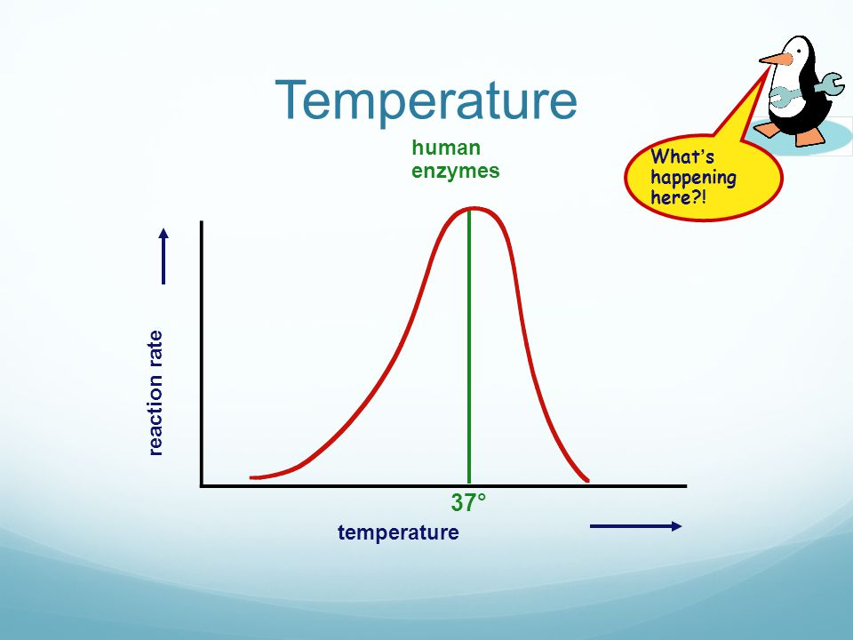 The effect of temperature For most enzymes the optimum temperature is about 30°C Many are a lot lower, cold water fish will die at 30°C because their