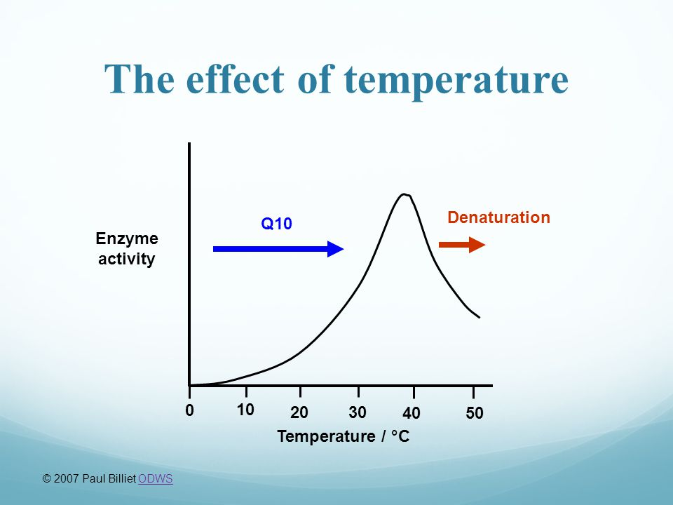 37° Temperature temperature reaction rate What's happening here?! human enzymes