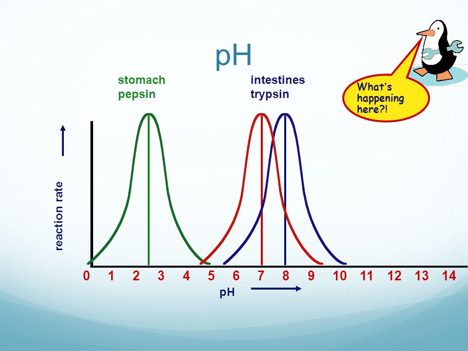 The effect of pH Optimum pH values Enzyme activity Trypsin Pepsin pH 1 3 5 7 9 11 © 2007 Paul Billiet ODWSODWS