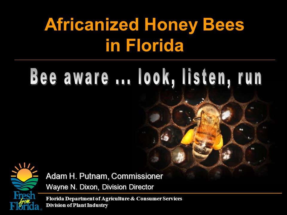 Florida Department of Agriculture & Consumer Services Division of Plant Industry Africanized Honey Bees in Florida Adam H. Putnam, Commissioner Wayne
