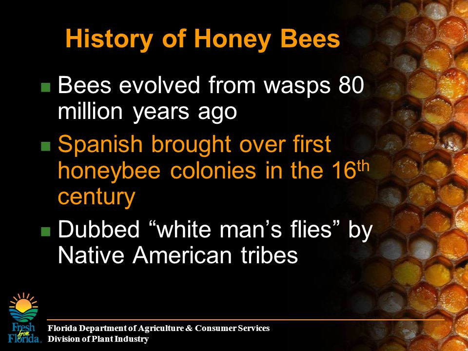 Florida Department of Agriculture & Consumer Services Division of Plant Industry Bees evolved from wasps 80 million years ago Spanish brought over first honeybee colonies in the 16 th century Dubbed white man's flies by Native American tribes History of Honey Bees
