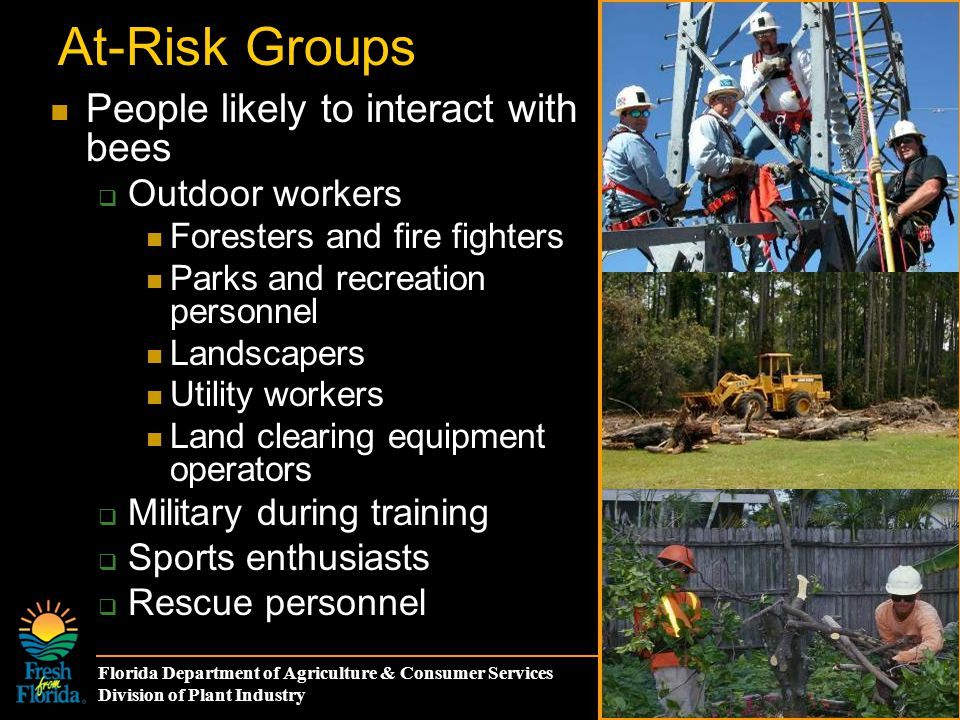 Florida Department of Agriculture & Consumer Services Division of Plant Industry At-Risk Groups People likely to interact with bees  Outdoor workers Foresters and fire fighters Parks and recreation personnel Landscapers Utility workers Land clearing equipment operators  Military during training  Sports enthusiasts  Rescue personnel