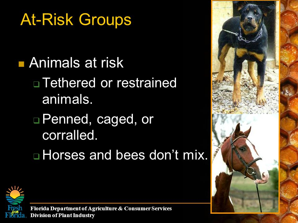 Florida Department of Agriculture & Consumer Services Division of Plant Industry At-Risk Groups Animals at risk  Tethered or restrained animals.